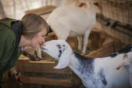 A woman in a stable on an organic farm.  White and black goats. - MINF00166