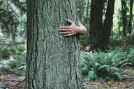 Man hugging tree in lush, green forest - MINF00733