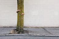 Man hugging tree on urban street and sidewalk - MINF00736