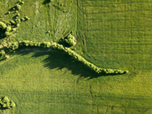 Russia, Central Russia, green field and trees - KNTF01144