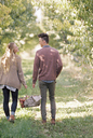 Apple orchard. Couple carrying a basket of apples. - MINF02282