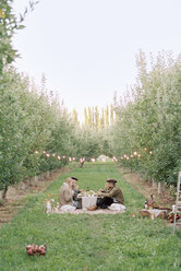 Apple orchard. Group of people having a picnic on the grass. - MINF02285