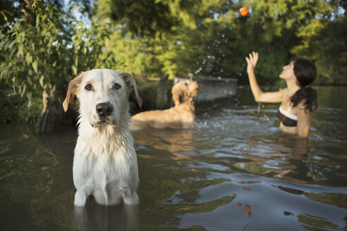 A woman swimming with her two dogs in a lake. Throwing the ball in play. - MINF02733