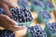 Organic fruit displayed on a farm stand. Blueberries in punnets. - MINF02789