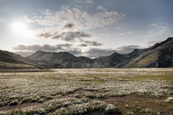 Iceland, South West, Landmannalaugar, highland - DMOF00055