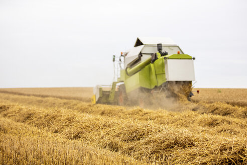 Serbia, Vojvodina, Combine harvesting wheat field - NOF00065