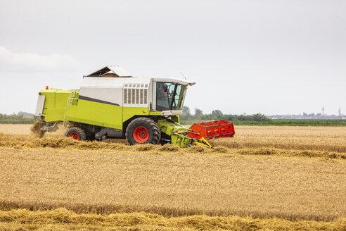Serbia, Vojvodina, Combine harvesting wheat field - NOF00068
