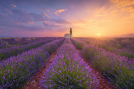 France, Alpes-de-Haute-Provence, Valensole, lavender field at twilight - RPSF00195