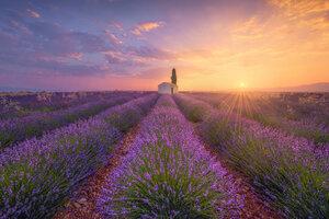 France, Alpes-de-Haute-Provence, Valensole, lavender field at twilight - RPSF00195