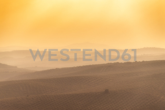 Spain, Andalucia, Olive trees on hillside at sunset - SMAF01059