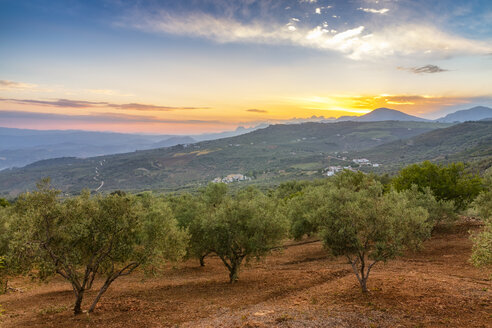 Spain, Andalucia, Olive trees on hillside groves at sunset - SMAF01116