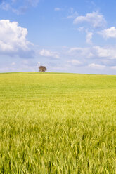Spain, Andalucia, fields of barley near to Alhama de Granada - SMAF01131