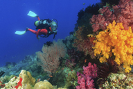 Diver swimming in coral reef - ISF18229