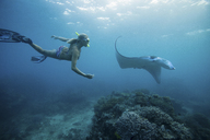 Woman snorkeling with ray underwater - ISF18738
