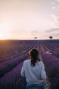 France, Valensole, back view of  woman standing in front of lavender field enjoying sunset - GEMF02234