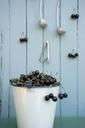 Bucket full of cherries - GISF00345