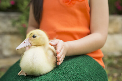 A child with a duckling on her lap. - MINF03000