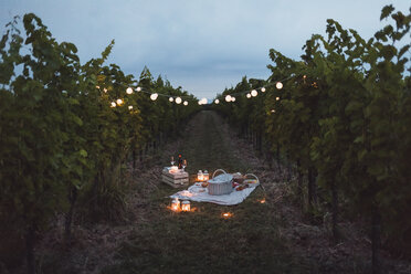 Food and light arranged in vineyard for a picnic at night - MAUF01659