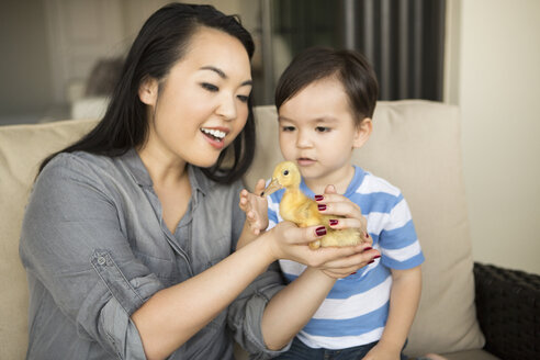 Smiling woman holding a yellow duckling in her hands, her young son watching. - MINF03973