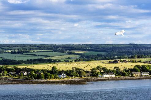 United Kingdom, Scotland, Invergordon - THAF02226