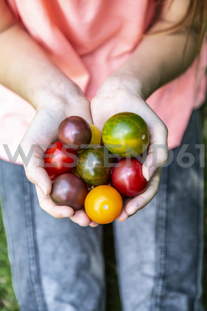 Girl holding colorful tomatoes in hand - SARF03872