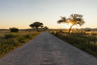 Africa, Namibia, Etosha National Park, Landscape, gravel road at sunrise - FOF09985