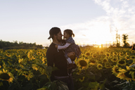 Bearded man wearing baseball cap carrying young girl, standing in field of sunflowers. - MINF05079