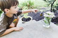 Boy, child looking at a butterfly hanging from a twig in a flower arrangement. - MINF05112