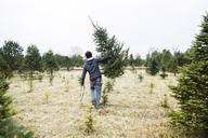 Man carrying a Christmas tree in a field at a Christmas tree farm. - MINF05264