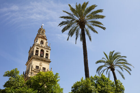 Spain, Andalusia, Cordoba, Torre del Alminar of Mosque–Cathedral and palms - WIF03544