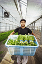 Worker in a greenhouse holding a crate full of fresh harvested vegetables. - MINF05699
