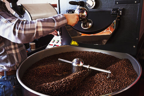Specialist coffee shop. Coffee beans roasting in a drum, being stirred with a metal paddle. - MINF06405