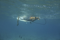 Maledives, Indian Ocean, surfer lying on surfboard, underwater shot - KNTF01185