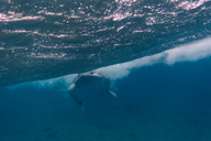 Maledives, Indian Ocean, surfer sitting on surfboard, underwater shot - KNTF01206