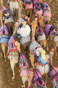 High angle view of people riding on camels with colourful saddles along a dusty road. - MINF06560