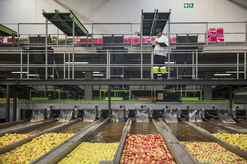Worker checking apple washing process - ZEF15914