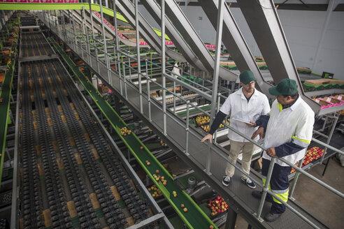 Workers talking in apple factory - ZEF15917