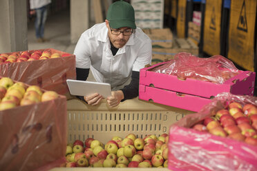 Worker checking apple stock, using tablet - ZEF15972