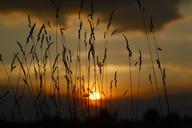 Germany, grasses at sunset - JTF01030