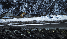 Surfers carrying surfboards towards wooden buildings in a snowy landscape. - MINF06675