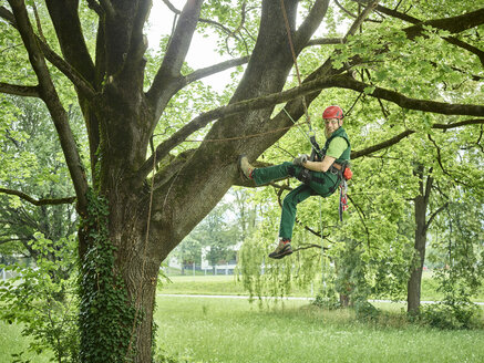 Tree cutter hanging on rope in tree - CVF01062