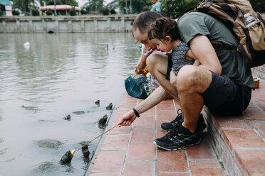Thailand, Bangkok, Ayutthaya, father and daughter feeding turtles - GEMF02291