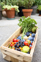 Harvest, different sorts of vegetables and fruits in basket - NDF00782