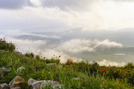 Albania, Fier County, View from Byllis, landscape and morning fog - SIEF07853
