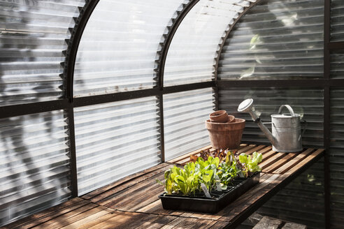 Interior of small new greenhouse. - MINF08320