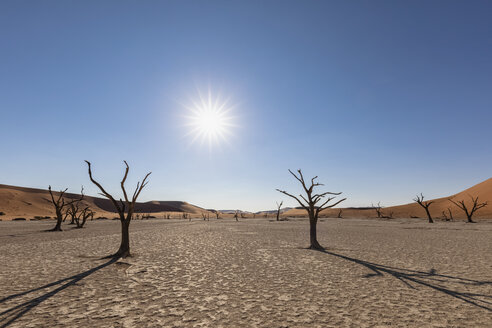Africa, Namibia, Namib-Naukluft National Park, Deadvlei, dead acacia tree in clay pan - FOF10053
