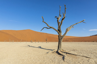 Africa, Namibia, Namib-Naukluft National Park, Deadvlei, dead acacia tree in clay pan - FOF10056