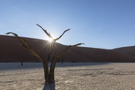 Africa, Namibia, Namib-Naukluft National Park, Deadvlei, dead acacia tree in clay pan - FOF10065