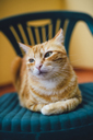 Portrait of ginger cat resting on a chair - RAEF02103