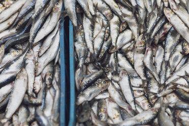 Morocco, Marrakesh, fish for sale at Djemaa el Fna - MMAF00490